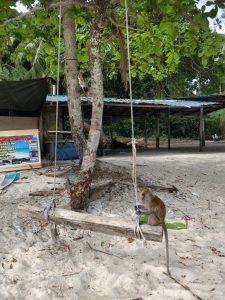 Kuvat on ottanut Malesiassa vaihdossa ollut Oskari, joka joutui keskeyttämään vaihtonsa koronaepidemian vuoksi