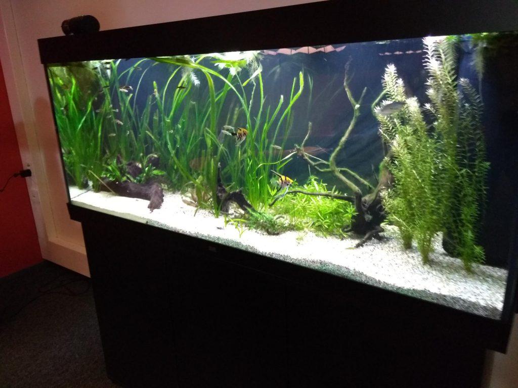 Akvaariolla viihtyvyyttä kahvihuoneeseen.