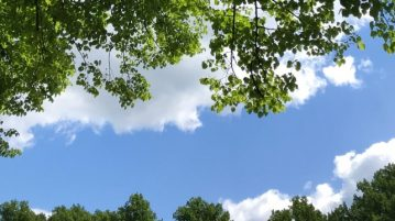 Vehreitä puunlatvoja taivasta vasten