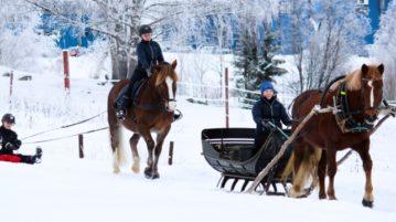 Hevosmatkailua talvisessa Hämeenlinnassa
