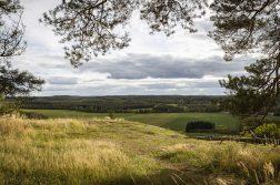 Metsää ja peltoa