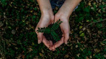 Vastuullisuustekohame_Kampanja_pieni_taimi_kasissa_luonnossa