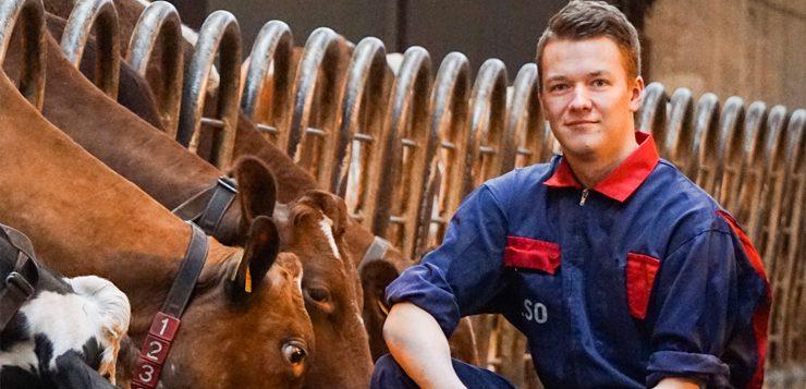 maaseutuelinkeinot mies navetassa lehmien luona