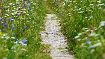polku niityllä