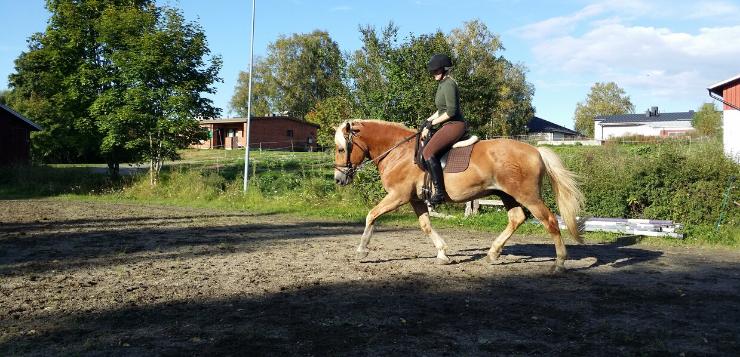 Ninan tavoitteena hevosalan yrittäjyys